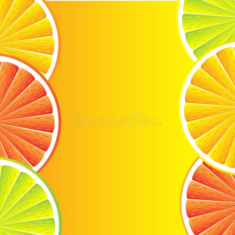 Zitrusfruchthintergrund vektor abbildung
