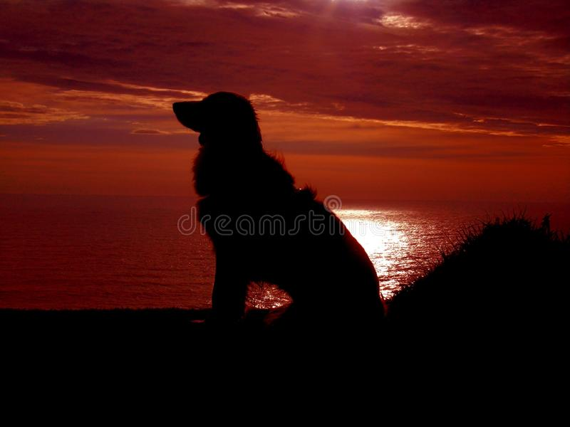 Zittingshond in de zonsondergang stock foto