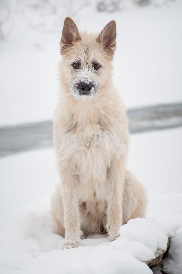 Zittingshond die u in sneeuwpark bekijken op de winterdag stock foto's