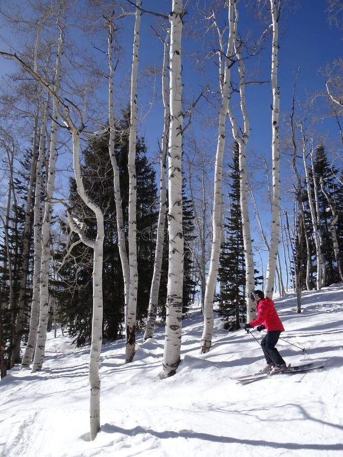 Zjazdowa kobiety narciarka zdjęcie royalty free