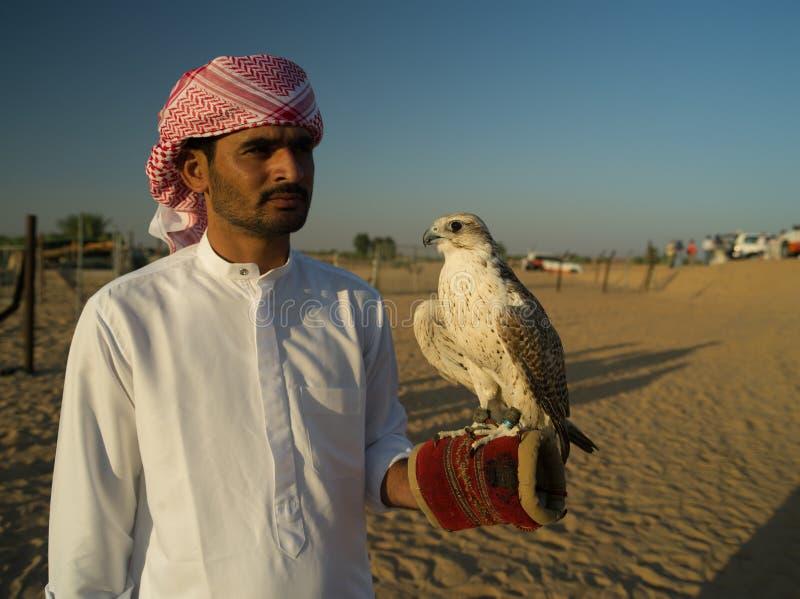 Zjednoczone Emiraty Arabskie, Dubaj, pustynia, sokolnik fotografia stock
