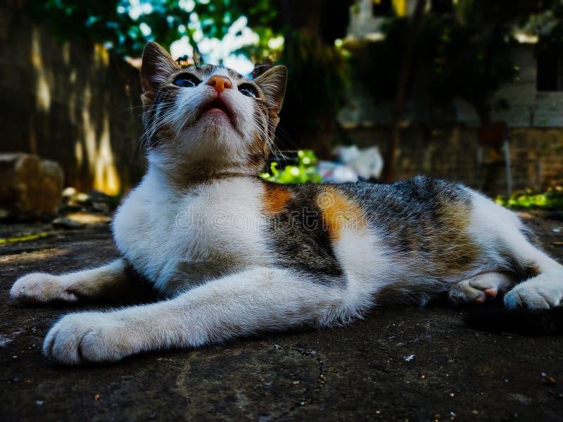 Zmęczony kot siedzi na spoczynku. obrazy royalty free