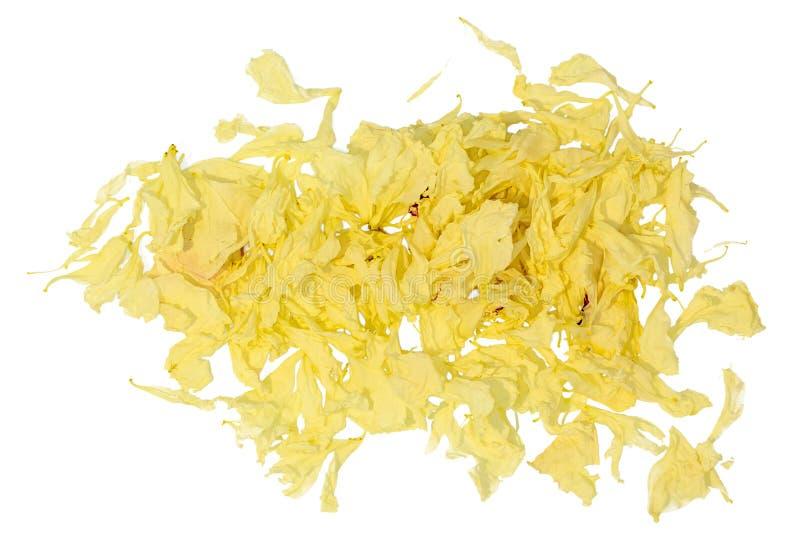 Zmarniali płatki kolor żółty róża obrazy royalty free