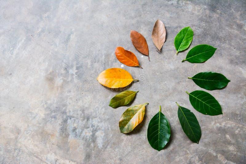 Zmiana sezonu pojęcia zieleń opuszcza suszyć liście zdjęcia stock
