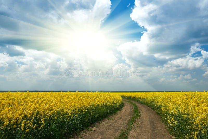 Zmielona droga w żółtym kwiatu polu z słońcem, piękny wiosna krajobraz, jaskrawy słoneczny dzień, rapeseed zdjęcie royalty free