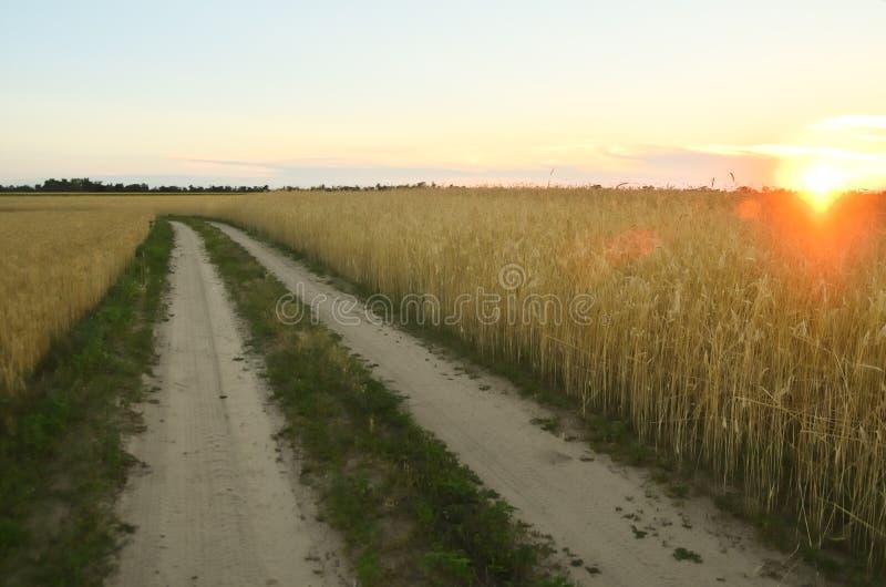 Zmielona droga w polu zdjęcie stock