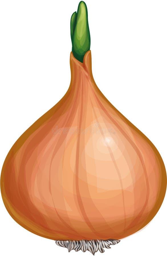 Zmieloni warzywa cebulkowi ilustracji