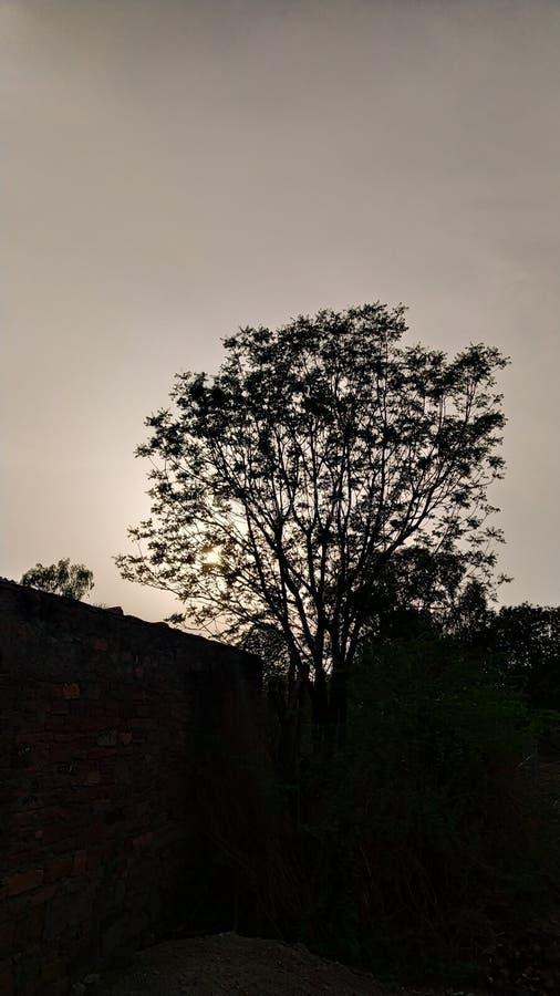 Zmierzchów drzewa doskonalić klimat fotografia stock