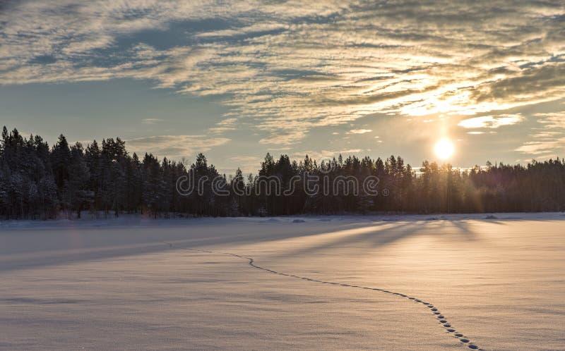Zmierzch łąka w zima lasowym Białym Dennym brzeg zdjęcie stock
