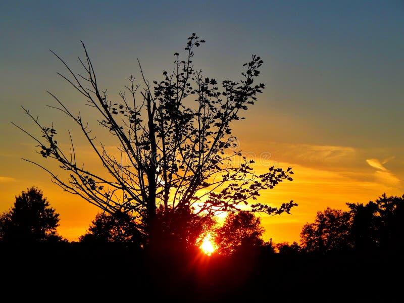 Zmierzch łuna Przez drzewa Przy zmierzchem fotografia royalty free