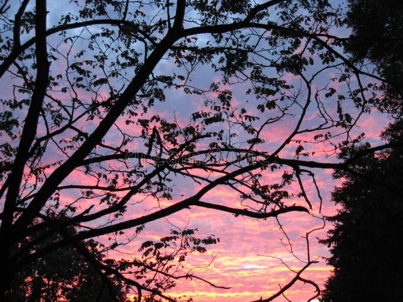 Zmierzch chmurnieje drzewa zdjęcie royalty free