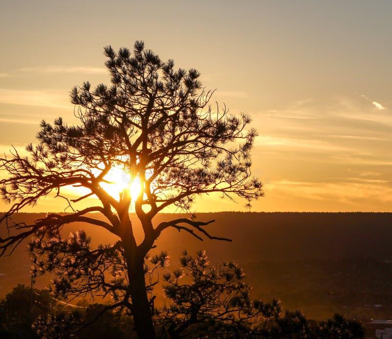 Zmierzch drzewna złota krajobrazowa natura zdjęcie royalty free