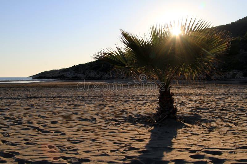 Zmierzch i drzewko palmowe zdjęcia stock