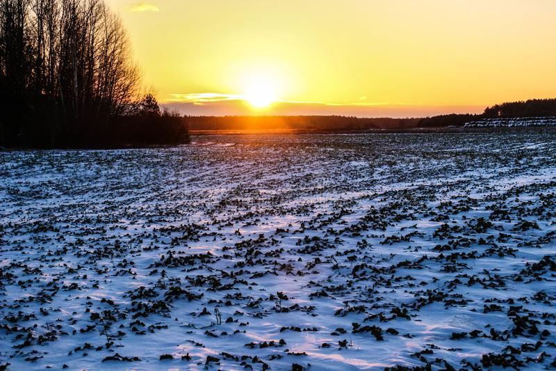Zmierzch i jaskrawy zimy słońce nad lasem obraz stock