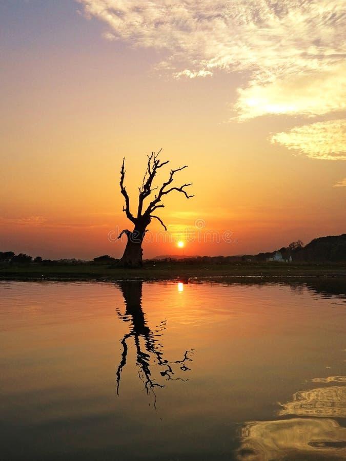 Zmierzch i sylwetka duży drzewo przy jeziornym Amarapura zdjęcie stock