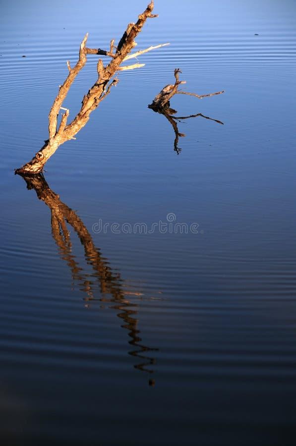 Zmierzch jeziorem obrazy stock