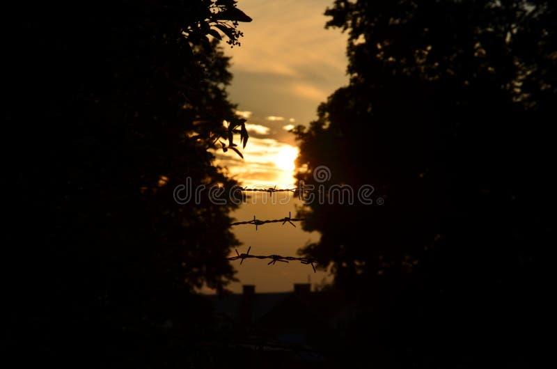 Zmierzch między drzewami za drutem kolczastym i zdjęcia stock