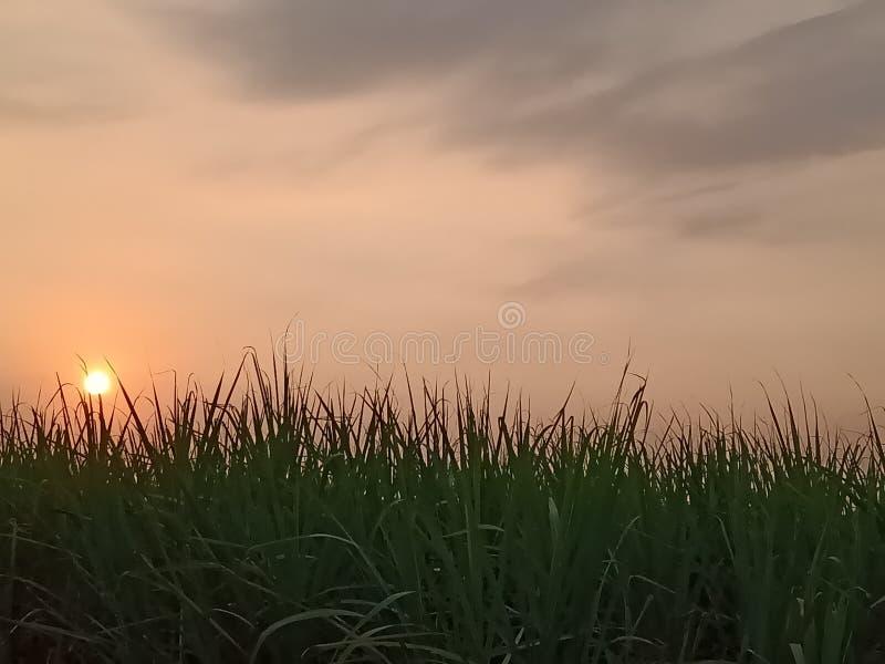 Zmierzch na cukrowych żurawi polach obraz stock