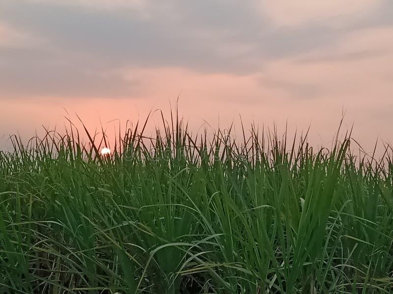 Zmierzch na cukrowych żurawi polach obrazy stock