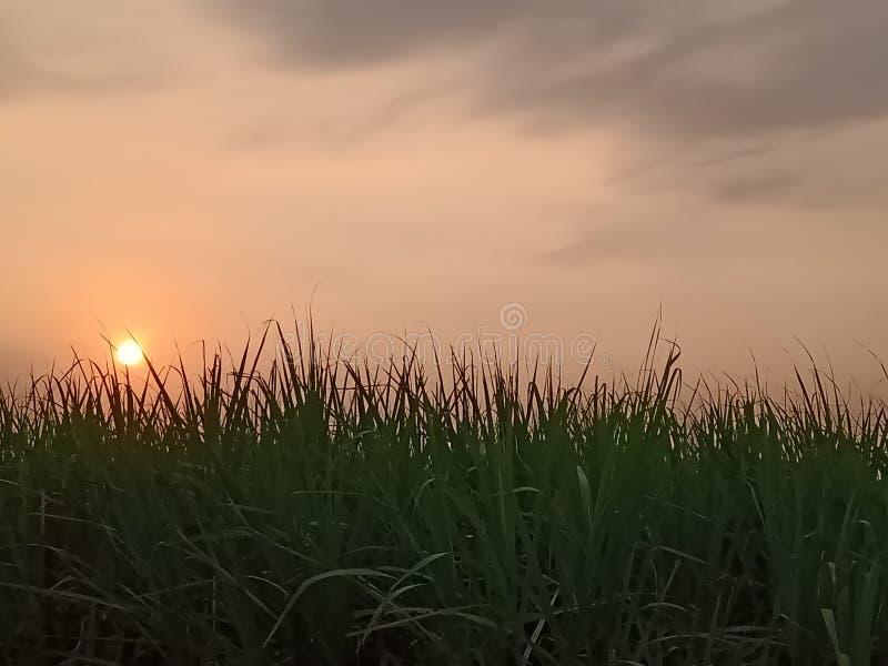 Zmierzch na cukrowych żurawi polach fotografia royalty free