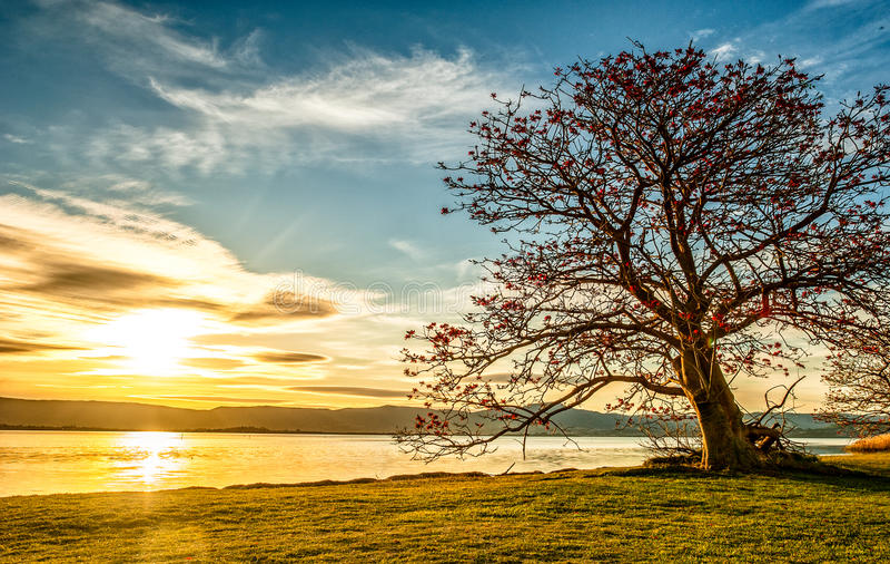 Zmierzch na drzewie zdjęcie royalty free
