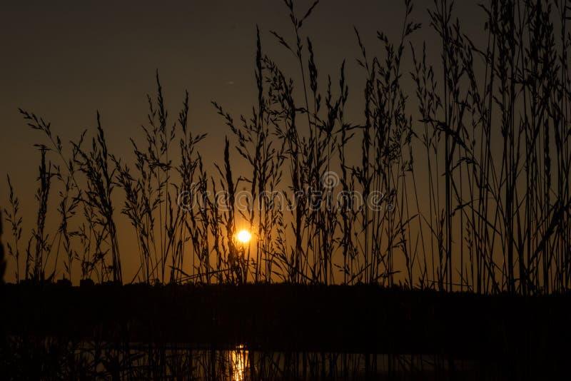 Zmierzch na jeziorze r?wno zdjęcie royalty free