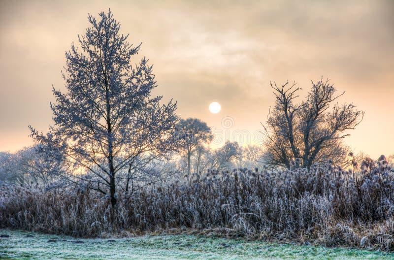 Zmierzch na mgłowym zima dniu z frosted drzewami fotografia stock