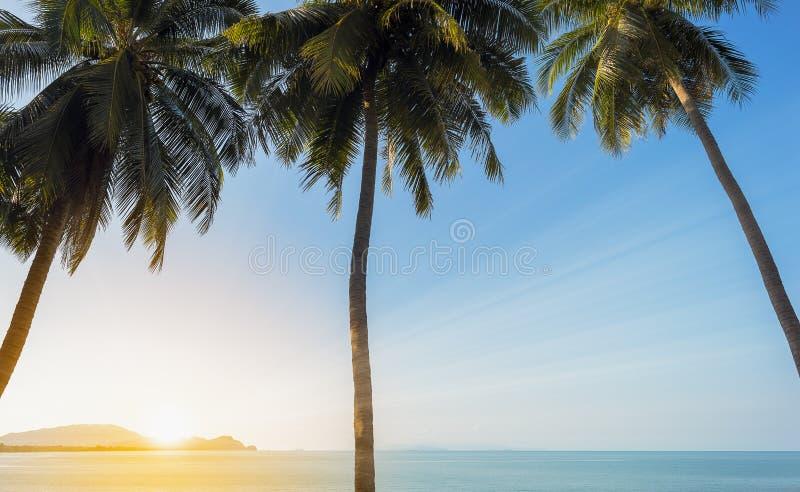 Zmierzch na morzu z 3 koks drzewkiem palmowym obrazy royalty free