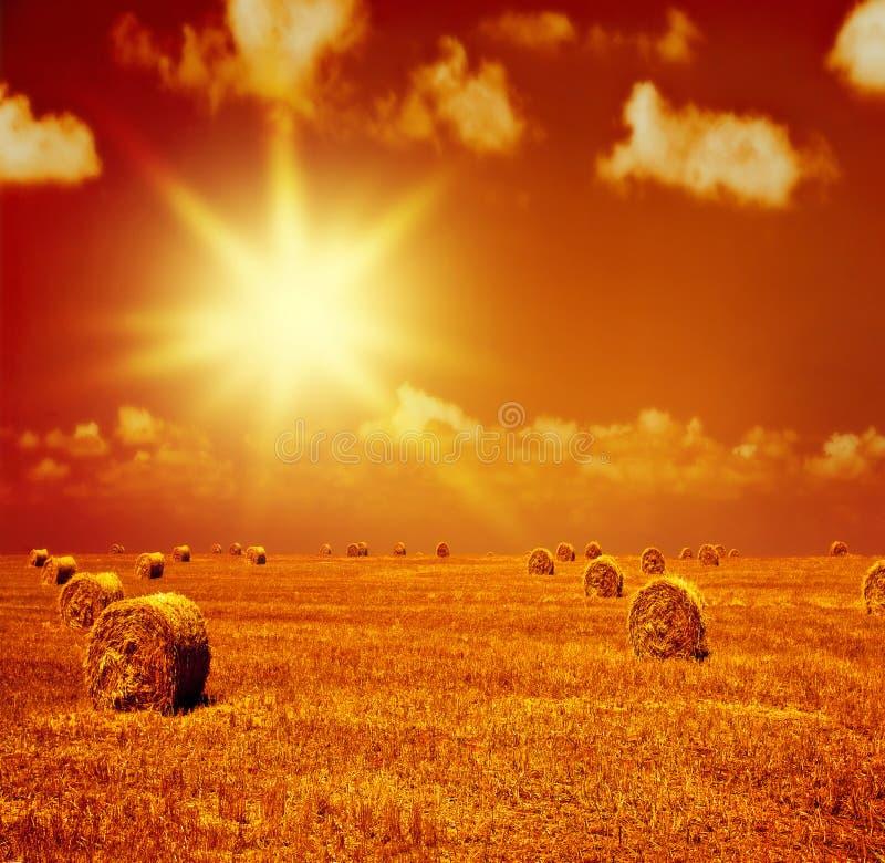 Zmierzch na suchym pszenicznym polu zdjęcie royalty free