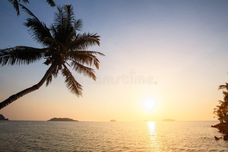 Zmierzch na tropikalnym wybrzeżu z sylwetkami drzewko palmowe nad wodą Natura zdjęcie stock