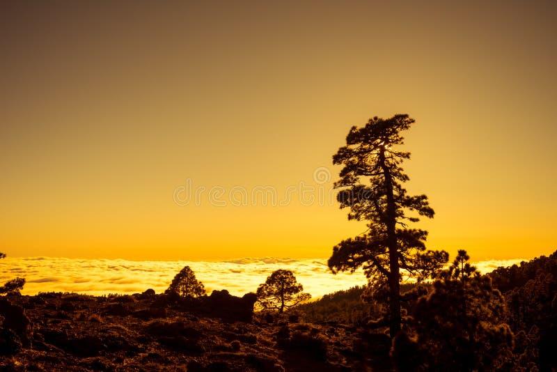 Zmierzch nad chmurami z Kanarową sosną, Tenerife zdjęcie stock