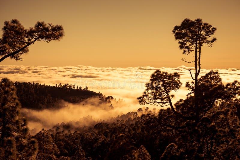 Zmierzch nad chmurami z Kanarową sosną, Tenerife obrazy stock