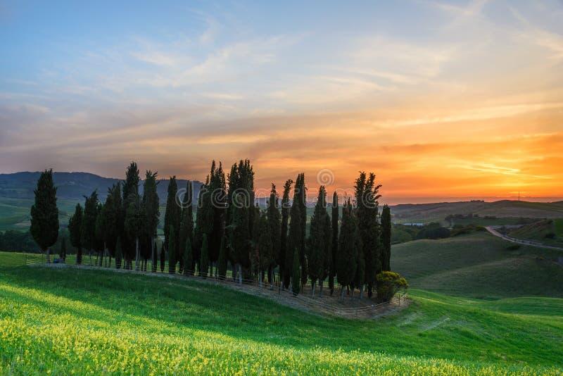 Zmierzch nad cyprysowymi drzewami w Tuscany obraz royalty free