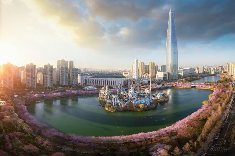 Zmierzch nad czereśniowego okwitnięcia parkiem i wierza tło w Seul mieście obrazy royalty free