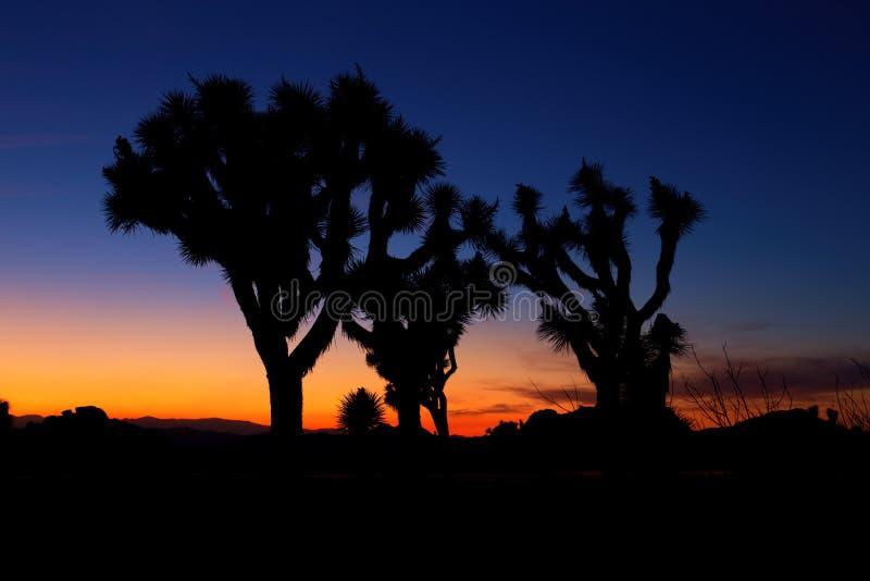 Zmierzch nad Joshua drzewem, Joshua drzewa park narodowy zdjęcie stock