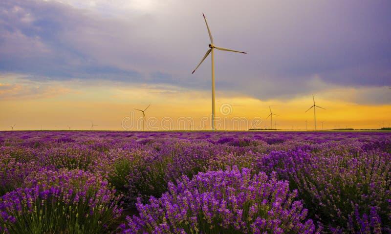 Zmierzch nad lawendy polem z silnikiem wiatrowym obraz royalty free