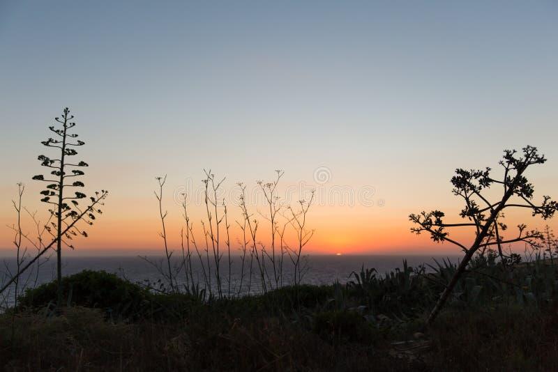 Zmierzch nad morza śródziemnomorskiego i Gozo wyspy agawy amerykaninem zdjęcia stock