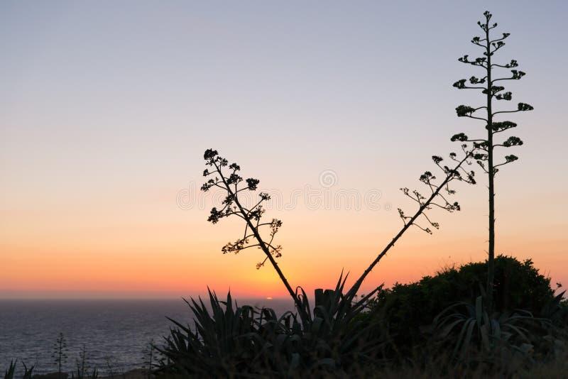 Zmierzch nad morza śródziemnomorskiego i Gozo wyspy agawy amerykaninem fotografia stock