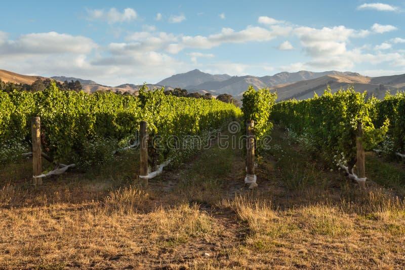 Zmierzch nad Nowa Zelandia winnicy krajobrazem fotografia royalty free