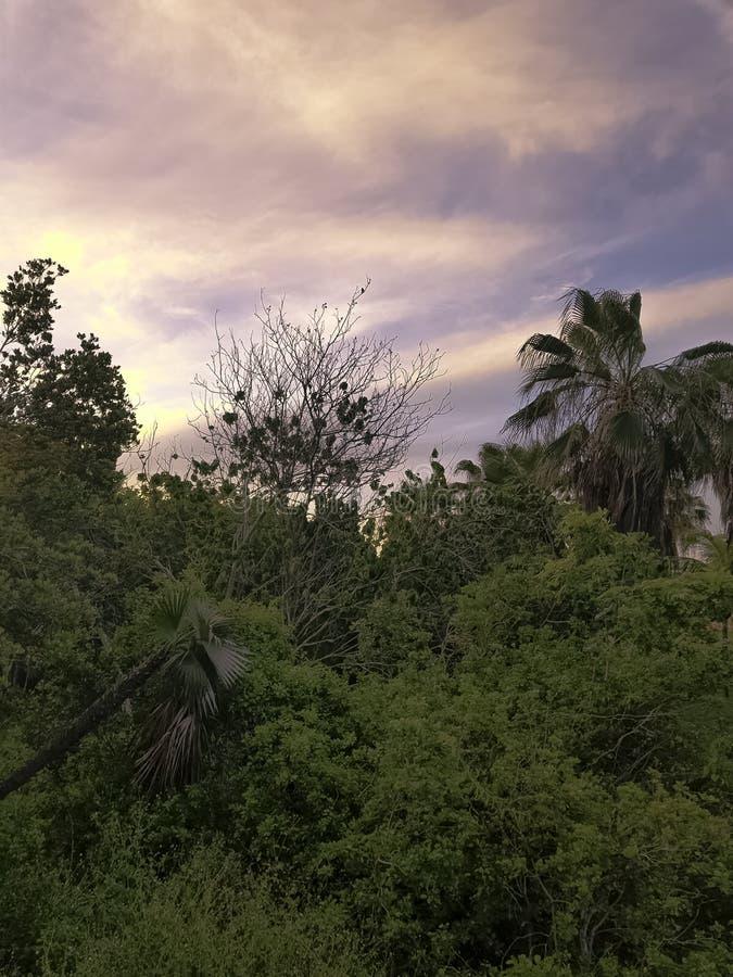 Zmierzch nad Półwysepa De Zapata parkiem narodowym, Zapata bagnem/ zdjęcia royalty free