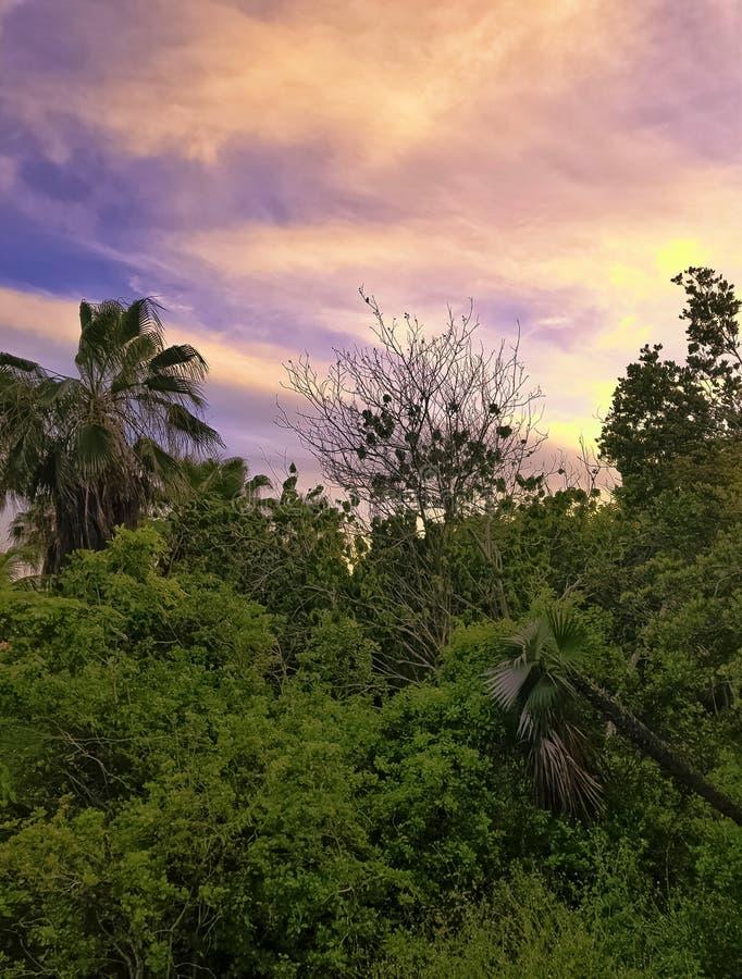 Zmierzch nad Półwysepa De Zapata parkiem narodowym, Zapata bagnem/, Kuba zdjęcia stock