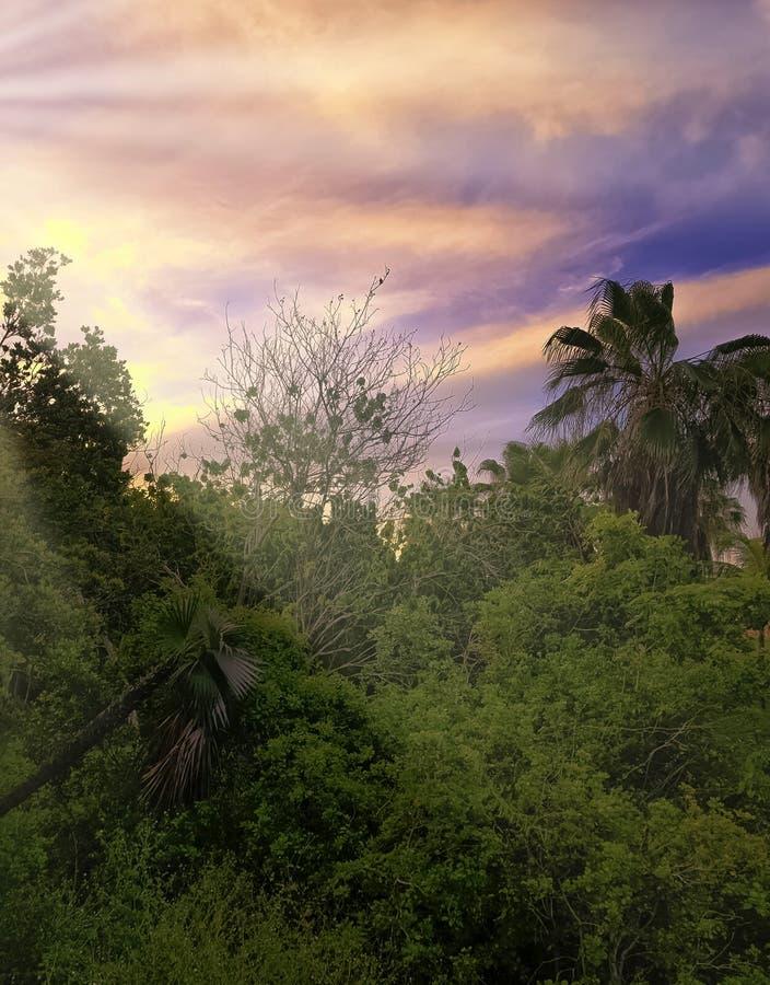 Zmierzch nad Półwysepa De Zapata parkiem narodowym, Zapata bagnem/, Kuba zdjęcia royalty free