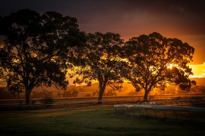 Zmierzch nad pustym biegowym kursem przy Gulgong NSW Au obrazy royalty free