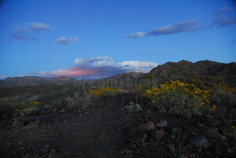 Zmierzch nad pustynnymi kwiatami fotografia stock