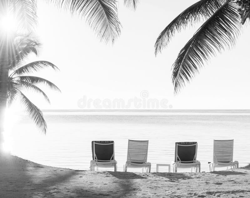 Zmierzch Nad Tropikalnym Plażowym Deckchairs Czarny I Biały zdjęcie royalty free