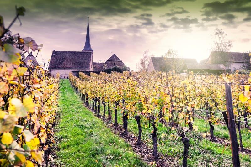 Zmierzch nad winnicami wino trasa Francja, Alsace zdjęcia stock