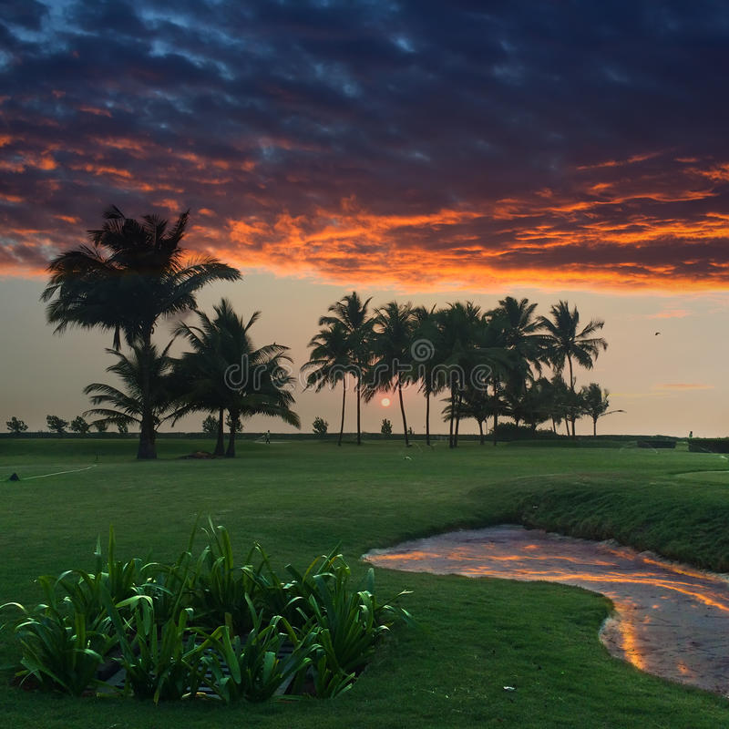 Zmierzch nad zielonym gazonem z drzewkami palmowymi goa obrazy stock