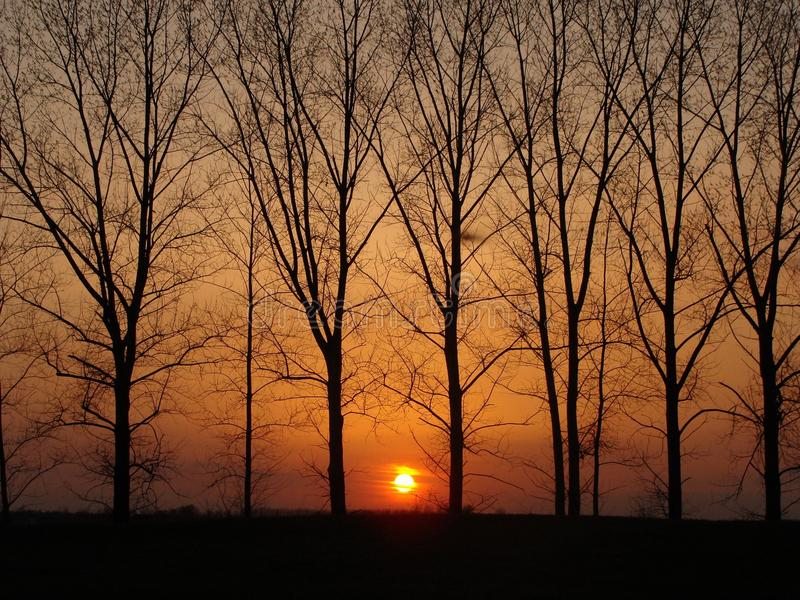 Zmierzch poza drzewa fotografia royalty free