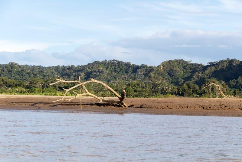 Zmierzch przy Beni rzecznymi falezami, przygoda w dżunglach Madidi park narodowy, amazonka rzeczny basen w Boliwia, Ameryka Połud obrazy royalty free
