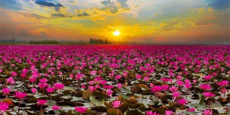 Zmierzch przy Dennym Czerwonym Lotus fotografia stock